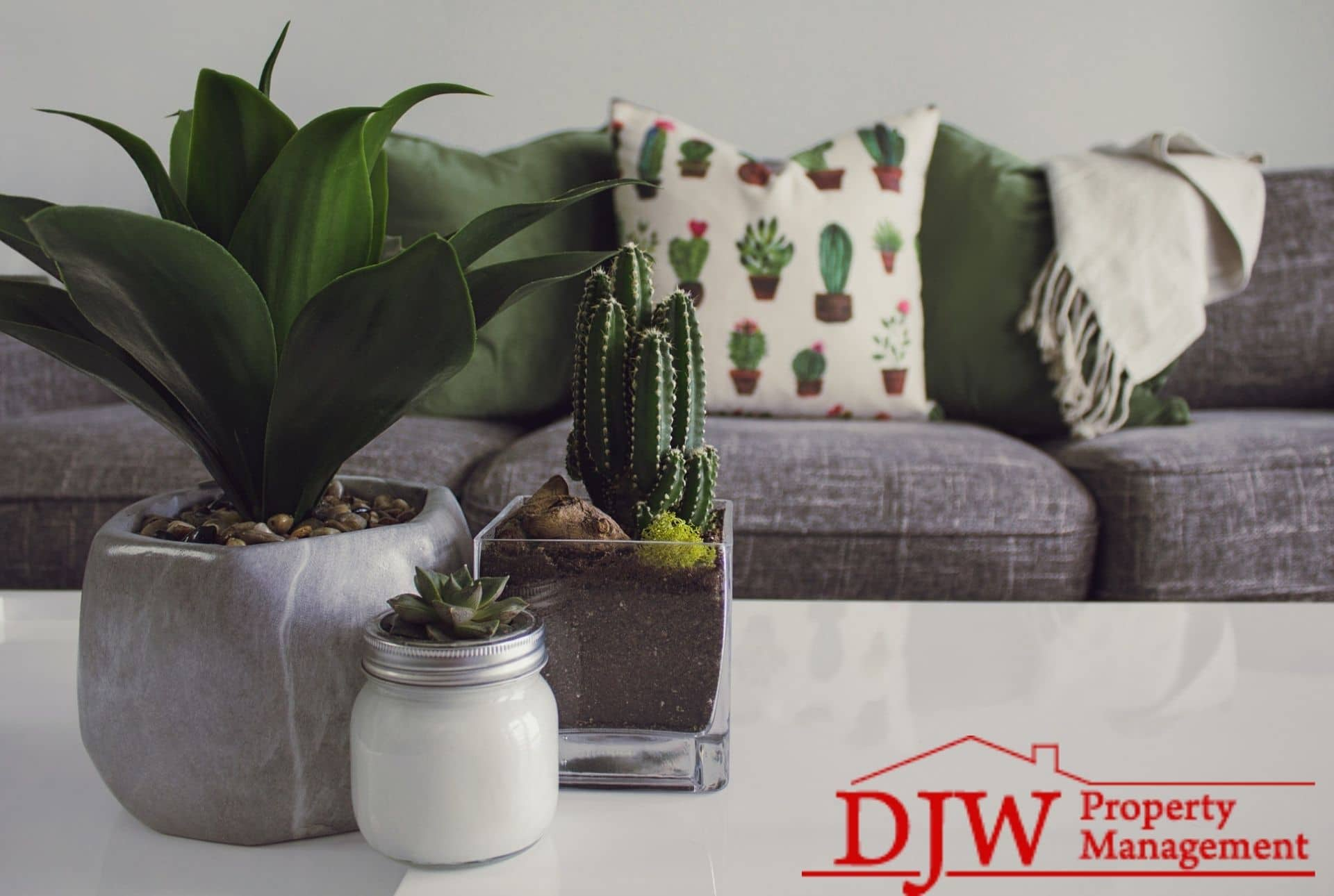 Succulents sit on a white coffee table; a grey couch is visible in the background with throw pillows and a cozy blanket.