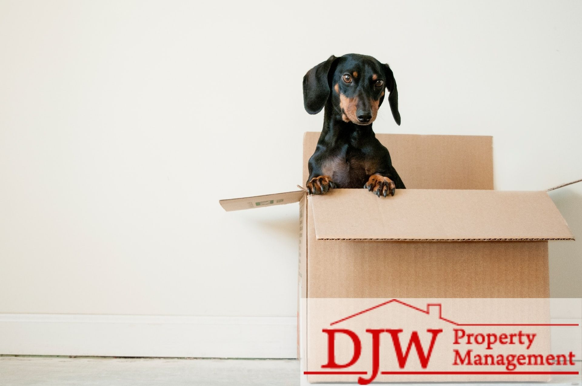 black and brown dog in a cardboard box